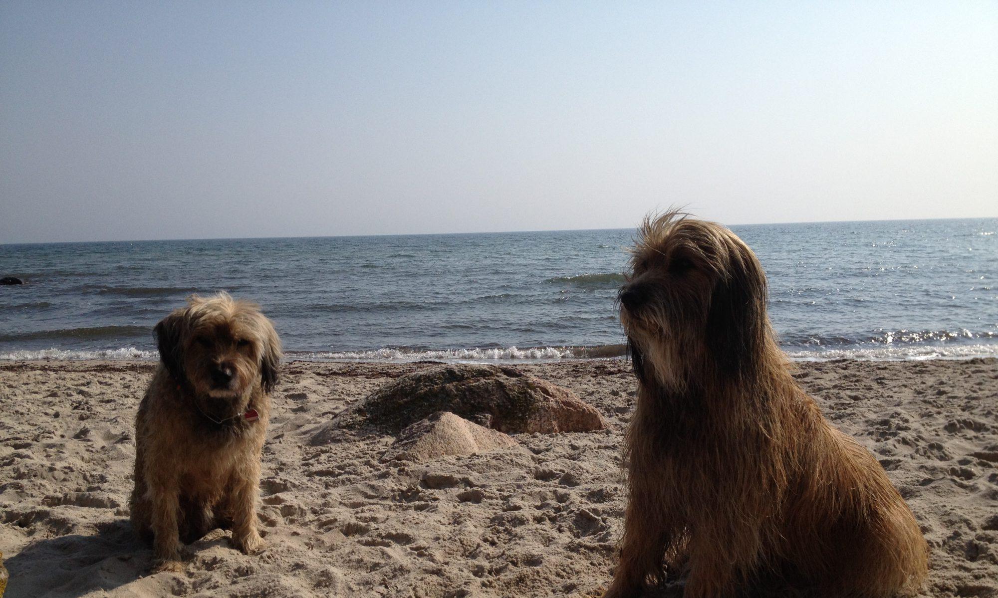 Hundesalon Samruc - Tel.0178-5326618